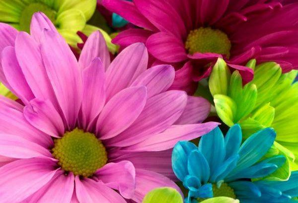 planting flowers basics